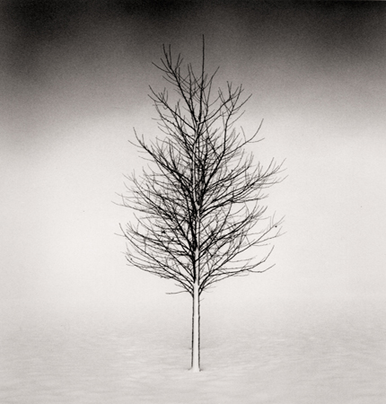 Tree Portrait, Study #1, Wakoto, Hokkaido, Japan, 2002 7.5 x 8 inches edition of 45 toned silver print