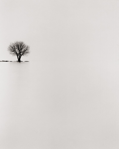 Biwa Lake Tree, Study #2, Omi, Honshu, Japan, 2002 9 x 7.5 inches edition of 45 toned silver print