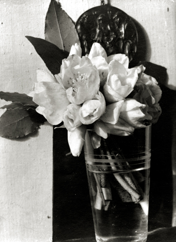 Untitled (Magnolias), c.1920s 4.5 x 3.25 inches vintage silver print
