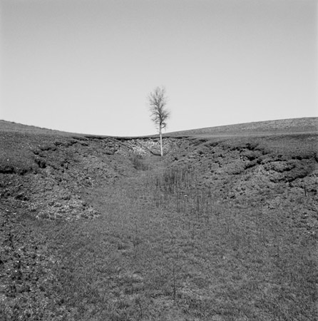 Cottonwood Tree, Flint Hills, 2006 from the series:  West & West  24 x 24 inches carbon pigment print edition of 5