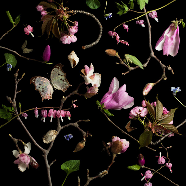 Botanical III (Bleeding Hearts and Magnolias), 2013 from the series:  Botanicals  24 x 24 inches (edition of 7) 36 x 36 inches (edition of 5) 52 x 52 inches (edition of 3) archival pigment print