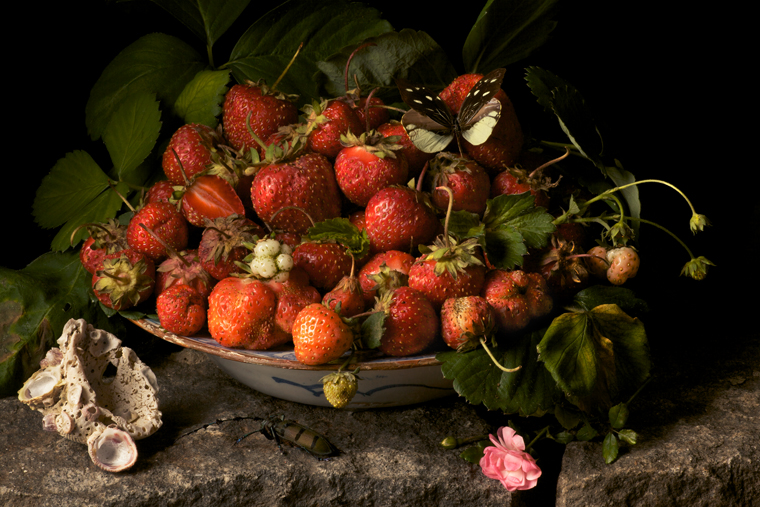 Strawberries, 2009 from the series:  Natura Morta  16 x 20 inches (edition of 15) 20 x 30 inches (edition of 7) 32 x 48 inches (edition of 5) archival pigment print