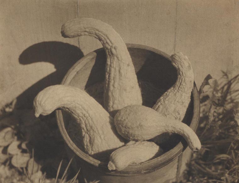Untitled (Gourds), 1922  vintage platinum/palladium print 6.5 x 8 inches