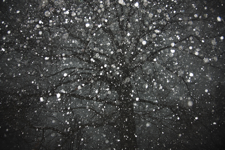 Tree 1, 2012 from the series  Snow  15.33 x 23 inches edition of 10 archival pigment print