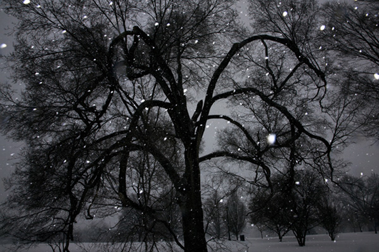 Tree 2, 2014 from the series  Snow  15.33 x 23 inches edition of 10 archival pigment print