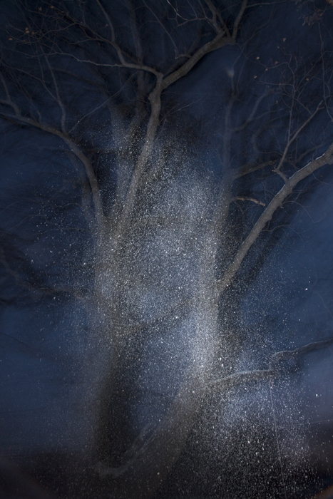 Tree 3, 2014 from the series  Snow  23 x 17.25 inches edition of 10 archival pigment print