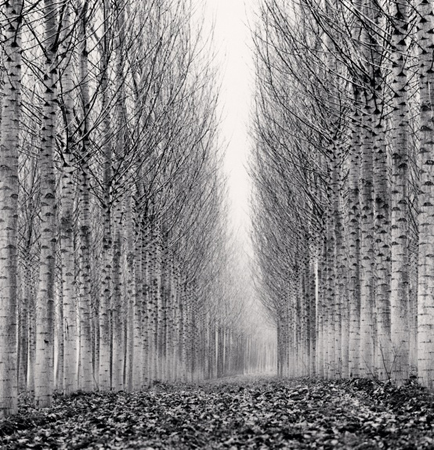 Corridor of Leaves, Guastalla, Emilia Romagna, Italy, 2006 8 x 7.75 inches edition of 45 toned silver print