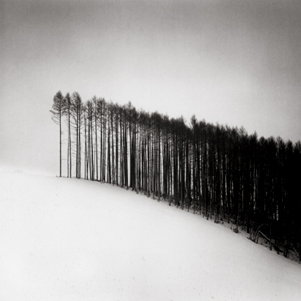 Forest Edge, Hokuto, Hokkaido, Japan, 2004 7.5 x 8 inches edition of 45 toned silver print