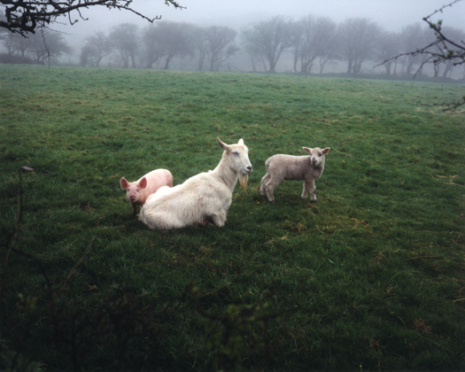 The Pig, the Lamb, and the Goat, 1989 20 x 24 inches edition of 12 chromogenic dye coupler print