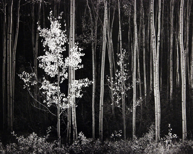 Aspens, Northern New Mexico, 1958 silver print mounted to board 17.5 x 22.25 inches from an edition of 100 plus 15 copies lettered A through O