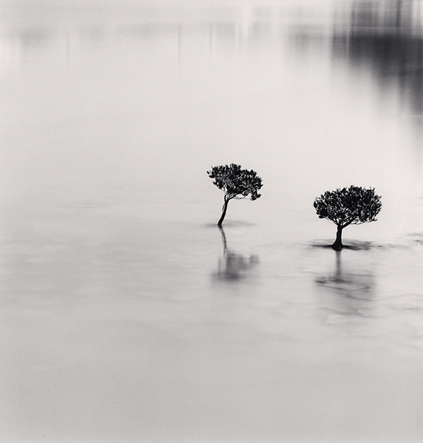 Two Mangrove Plants, Lantau Island, Hong Kong, 2007 8.25 x 7.75 inches  edition of 45 toned silver print