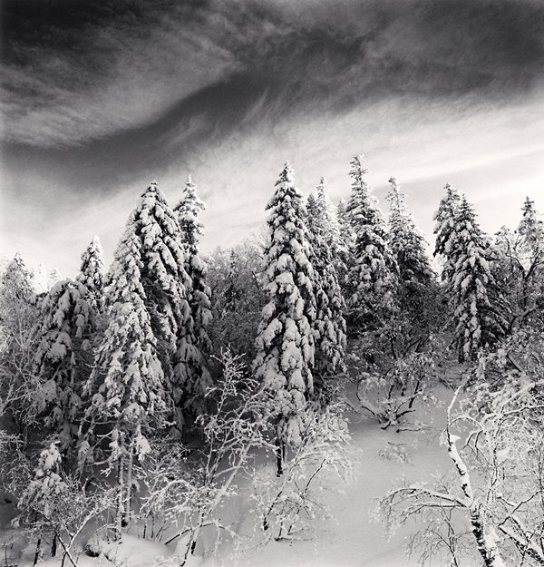 Snow Clad Trees, Heilongjiang, China, 2012 8 x 7.75 inches  edition of 45 toned silver print