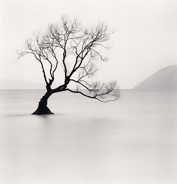 Wanaka Lake Tree, Study 1, Otago, 2013 8 x 7.75 inches  edition of 45 toned silver print