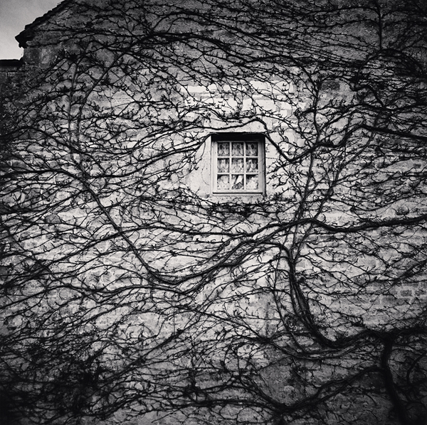 Window and Vines, L'Abbaye de Fontenay, Bourgogne, 2013 7.75 x 7.75 inches  edition of 45 toned silver print