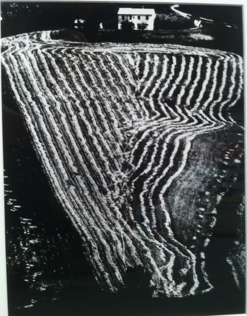 "From the series ""Storie di Terra,"" 1980 15 x 11.5 inches silver print"