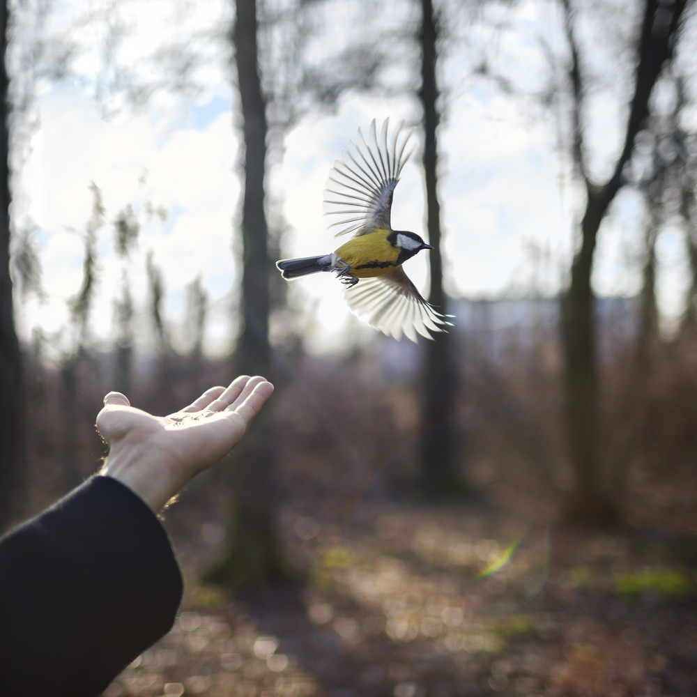 Goldfinch, St. Petersburg, Russia, 2014 14 x 14 inches (edition of 10) chromogenic dye coupler print 28 x 28 inches (edition of 7) chromogenic dye coupler print 40 x 40 inches (edition of 5) dye sublimation print on aluminum