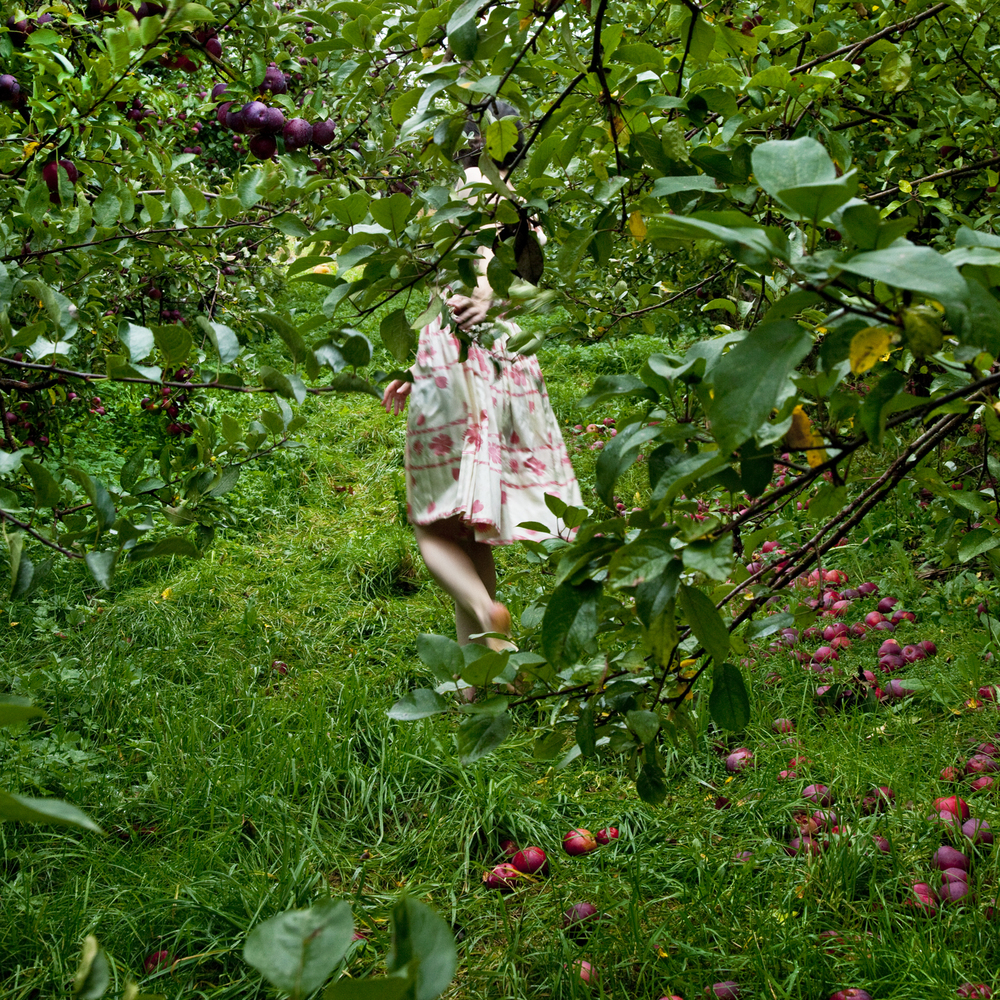 The Orchard, Warren, Maine, 2012 14 x 14 inches (edition of 10) chromogenic dye coupler print 28 x 28 inches (edition of 5) chromogenic dye coupler print 40 x 40 inches (edition of 7) dye sublimation print on aluminum