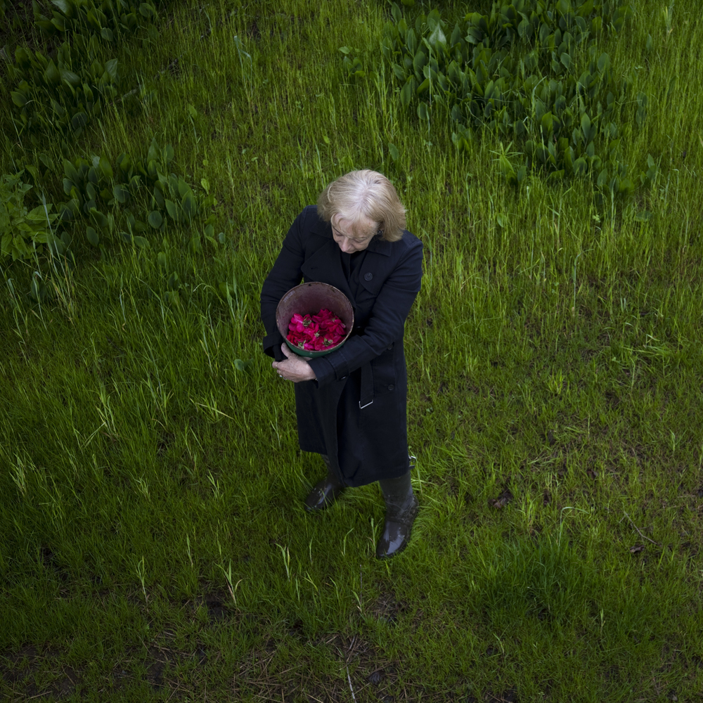 Mum & The Roses, Rockport, Maine, 2014 14 x 14 inches (edition of 10) chromogenic dye coupler print 28 x 28 inches (edition of 7) chromogenic dye coupler print 40 x 40 inches (edition of 5) dye sublimation print on aluminum