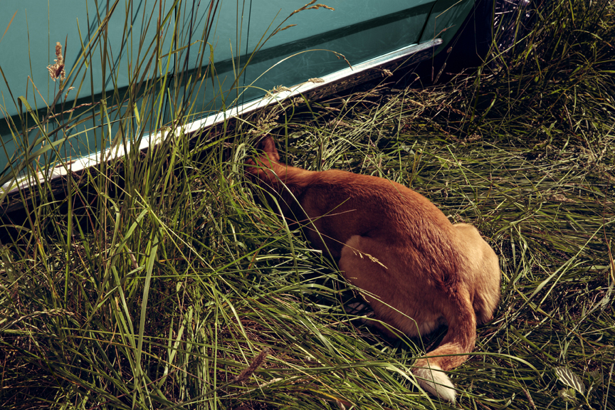 Stray Dog: Elk Rock Island, 2015 20 x 30 inches edition of 12 Archival pigment print