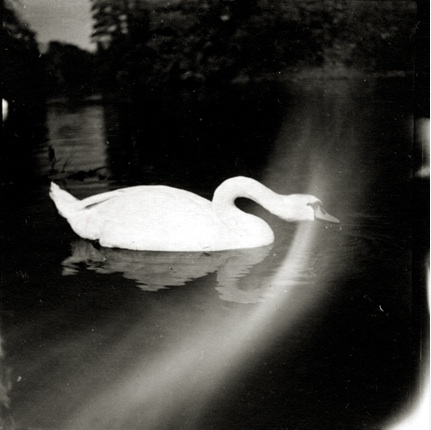 Swan in Munich, c. 1930 Vintage silver print 2.5 x 2.5 inches