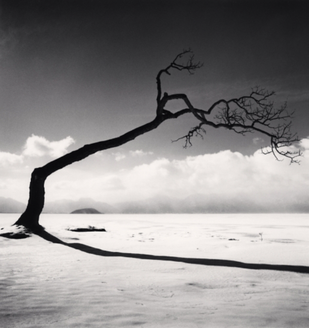 Michael Kenna Kusshara Lake Tree, Study 10, Kotan, Hokkaido, 2005 8 x 7.5 inches (edition of 45) toned silver print