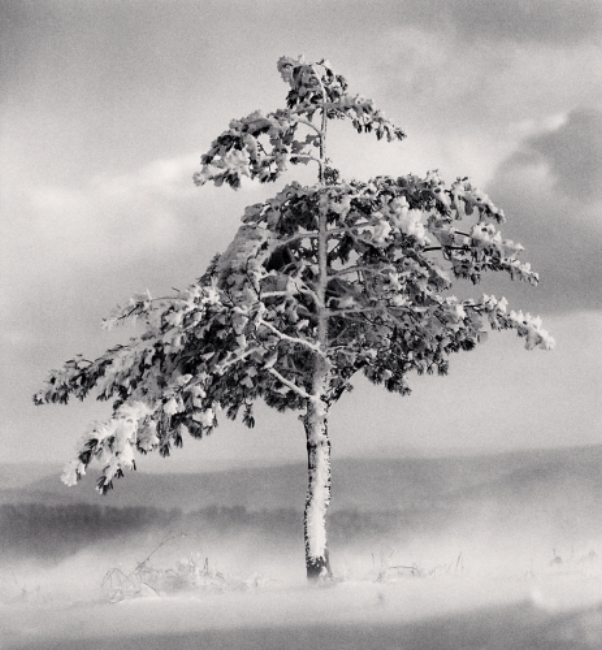 Michael Kenna Tree in Snowdrift, Yangcao Hill, Wuchang, Heilongjiang, 2011 8.25 x 7.75 inches (edition of 45) tones silver print