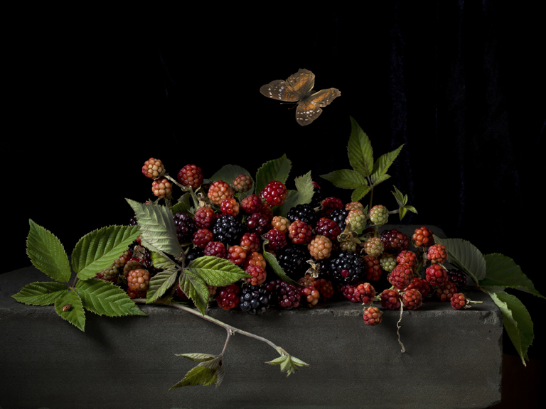 Blackberries and Butterfly after A.C., 2015 16 x 20 inches (edition of 15) 20 x 30 inches (edition of 7) 32 x 48 inches (edition of 5) archival pigment print