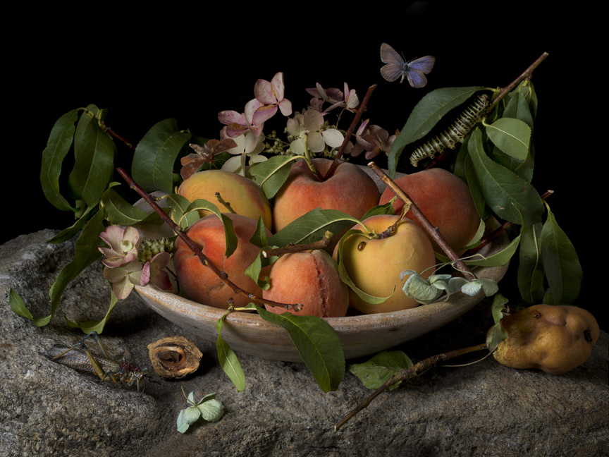 Peaches and Hydrangeas after G.G. and M.S.M., 2015 16 x 20 inches (edition of 15) 20 x 30 inches (edition of 7) 32 x 48 inches (edition of 5) archival pigment print