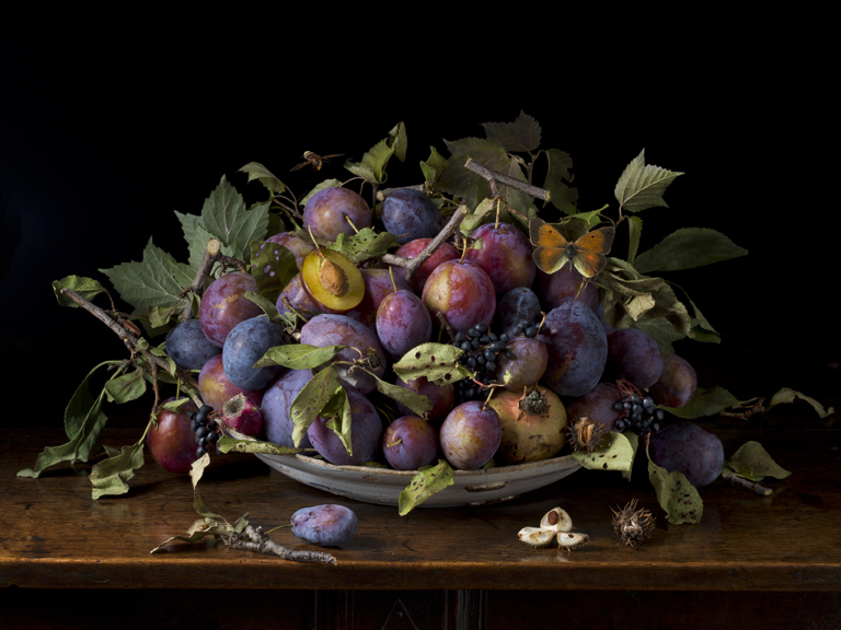 Italian Plums after G.G., 2015 16 x 20 inches (edition of 15) 20 x 30 inches (edition of 7) 32 x 48 inches (edition of 5) archival pigment print