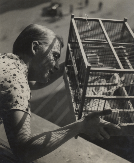 Untitled (canary), 1932-33 9 x 7 inches vintage silver print