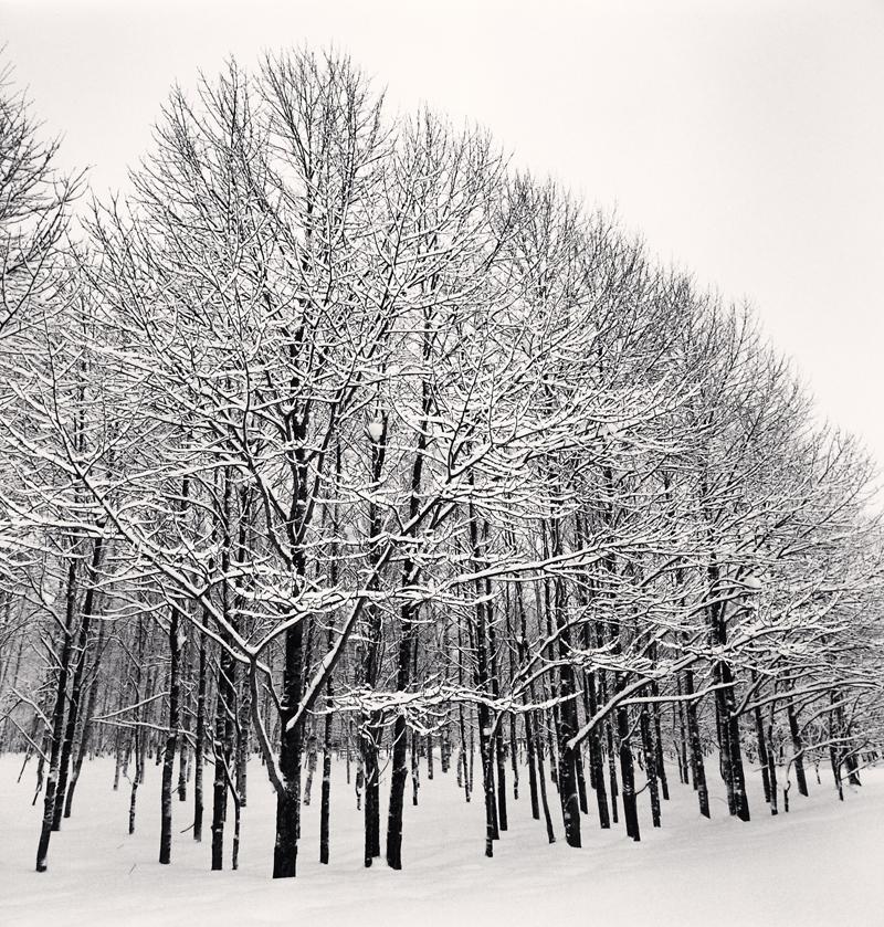 Forest Snow, Sakkuru-Otoineppu, Hokkaido, Japan, 2014 7.875 x 7.75 inches (edition of 45) toned silver print