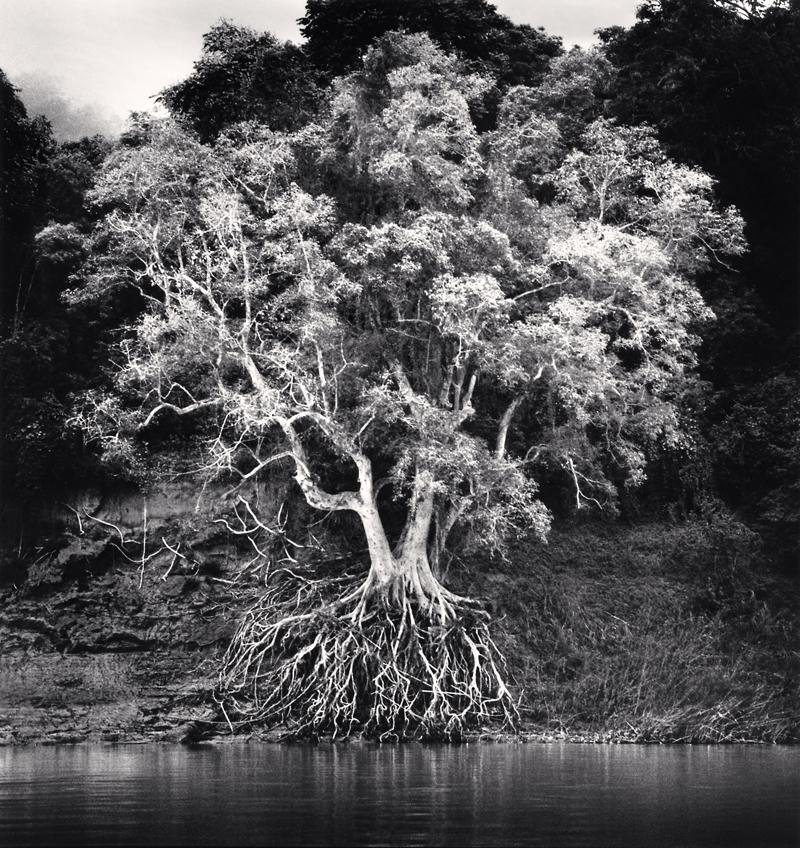 Kokdua Tree and Exposed Roots, Mekong River, Luang Prabang, Laos, 2015 8.375 x 7.75 inches (edition of 25) toned silver print