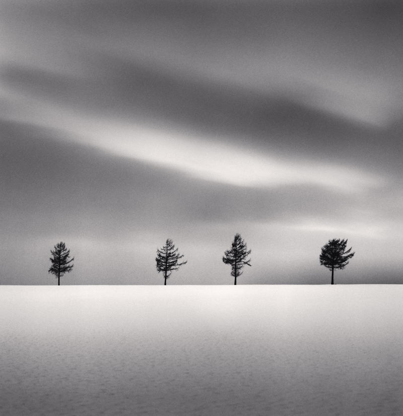 Kurosawa's Trees, Study 2, Memanbetsu, Hokkaido, Japan, 2009 8 x 7.75 inches (edition of 45) toned silver print