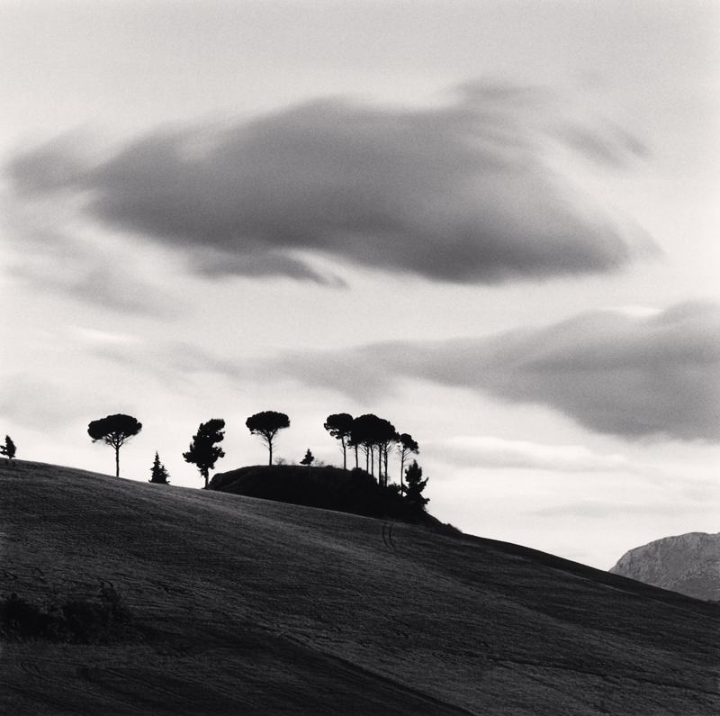 Pine Trees at Dusk, Contrada Cordano, Abruzzo, Italy, 2016 7.75 x 7.75 inches (edition of 25) toned silver print
