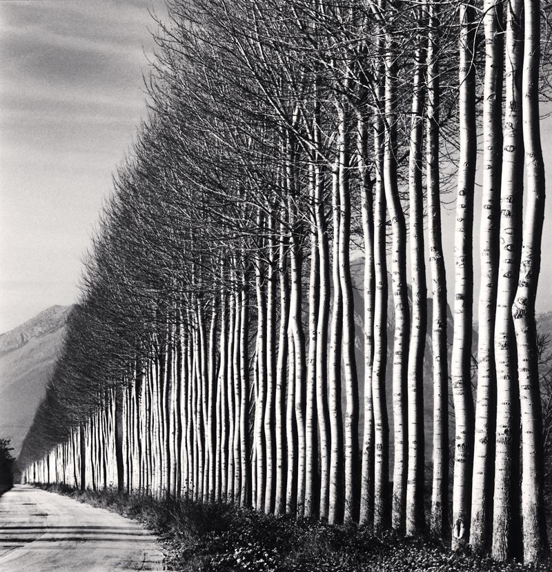 Poplar Trees, Fucino, Abruzzo, Italy, 2016 16 x 20 inches (edition of 4) toned silver print