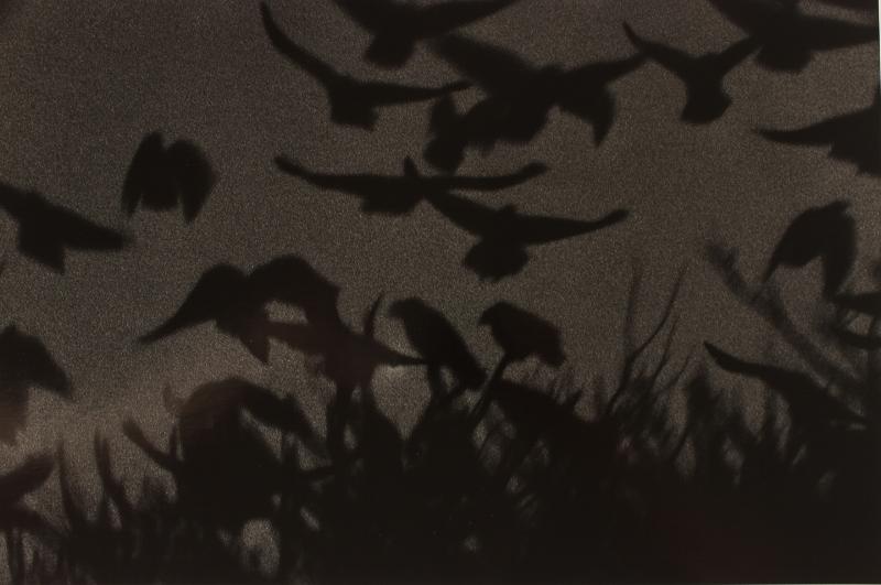 Masahisa Fukase Kanazawa, 1977  16 x 20 inches  silver print