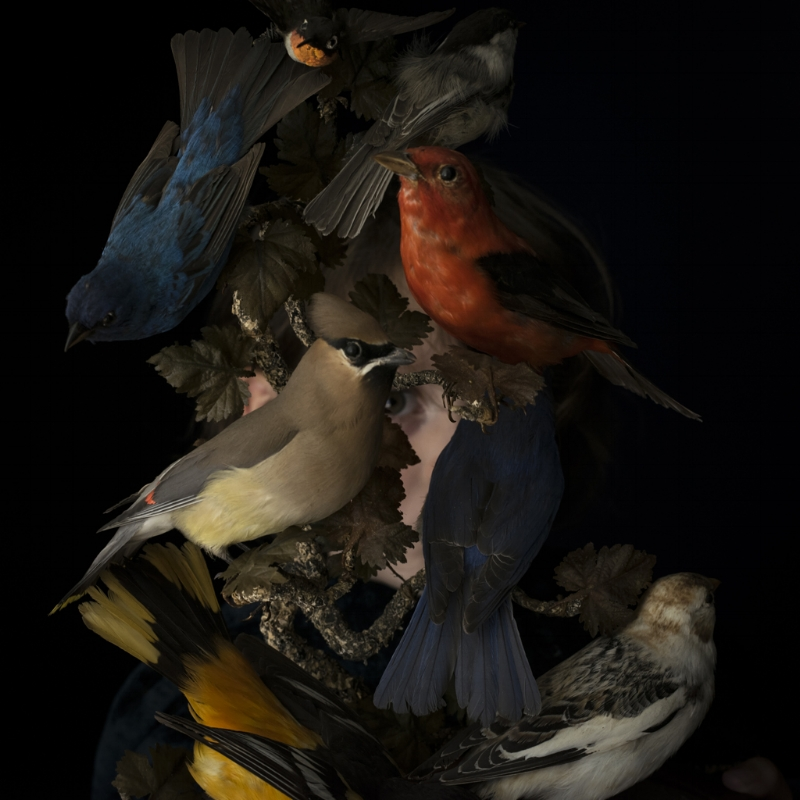 Cig Harvey  Birds of New England, 2016  14 x 14 inches (edition of 10)  28 x 28 inches (edition of 7)  40 x 40 inches (edition of 5)  dye sublimation print on aluminum  chromogenic dye coupler print
