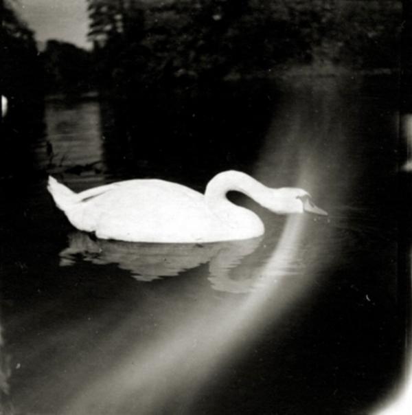 Artur Nikodem Swan in Munich, c. 1930 2.5 x 2.5 inches  vintage silver print