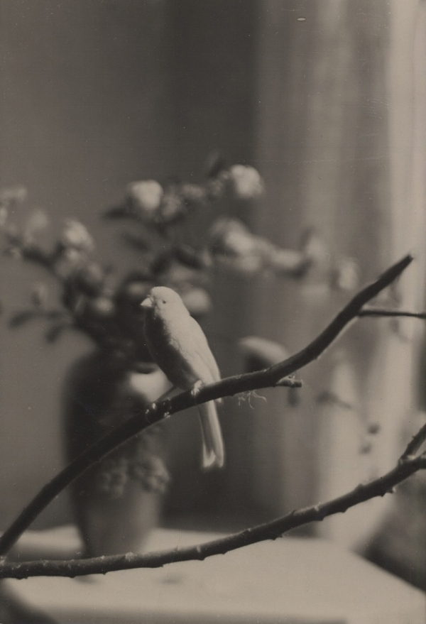 Elisabeth Hase  Untitled (Canary) 4.25 x 2.75 inches  silve print
