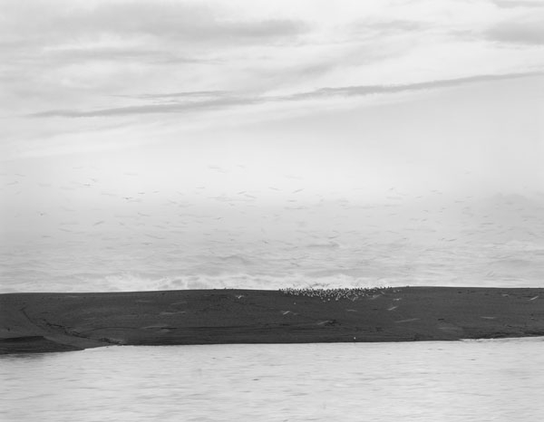 Chip Hooper Birds, Gualala Point, 2003  20 x 24 inches (edition of 25) 26 x 32 inches (edition of 10) 44.25 x 56 inches (edition of 5) silver print