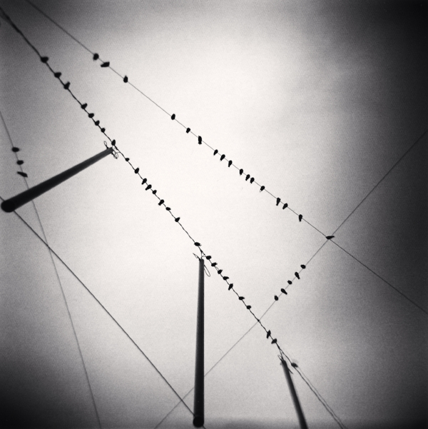 Michael Kenna  Fifty Two Birds, Zurich, Switzerland, 2008  7.75 x 7.75 inches (edition of 45)  toned silver print