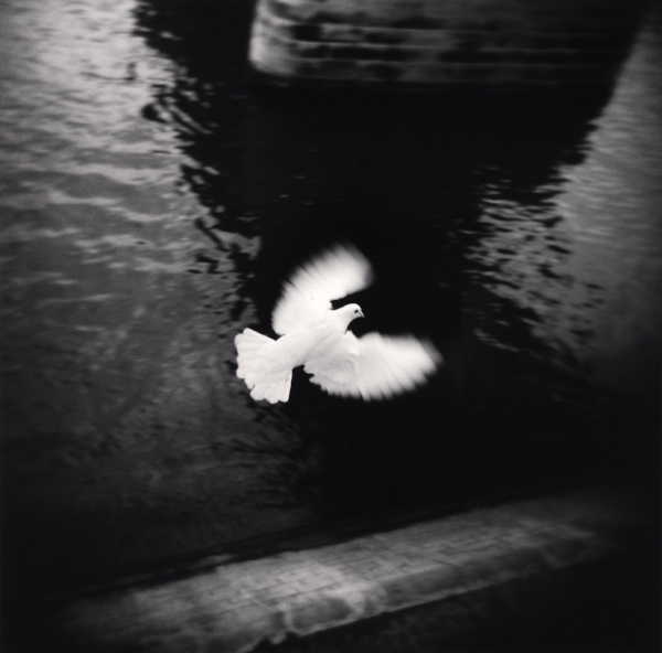 Michael Kenna  White Bird Flying, Paris, 2007  7.75 x 7.75 inches (edition of 45)  toned silver print
