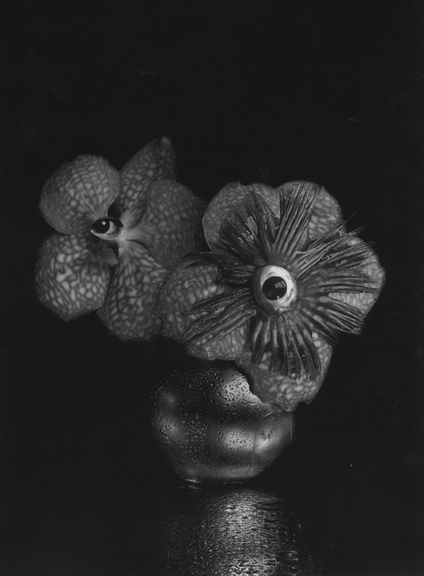Orchid and Fish , 1991  silver print  24 x 20 inches
