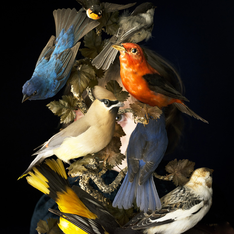 Birds of New England, Rockport, Maine , 2016 14 x 14 inches (edition of 10)  28 x 28 inches (edition of 7)  40 x 40 inches (edition of 5) Chromogenic dye coupler print