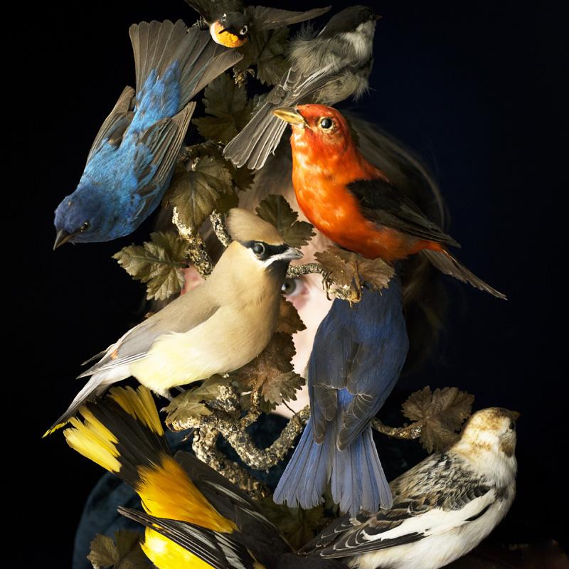 w_Harvey_BirdsOfNewEngland.jpg