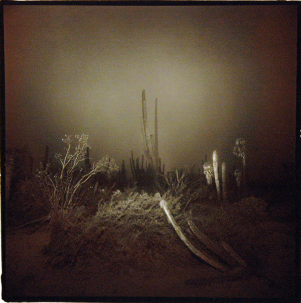 Untitled (Cardon Cactus), 1976  vintage split-tone print  20 x 16 inches