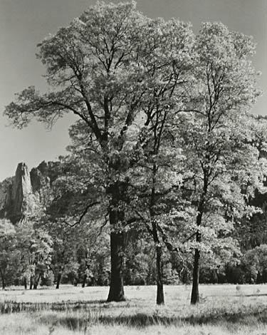 Autumn-Yosemite,  c. 1932  Vintage silver print  8.75 x 7 inches