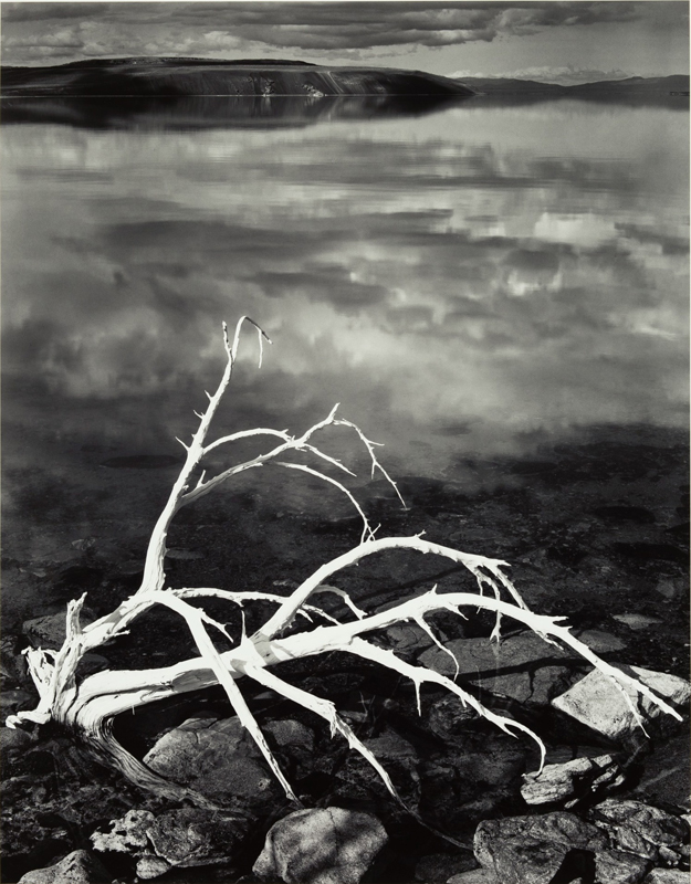 White Branches, Mono Lake, California , 1950