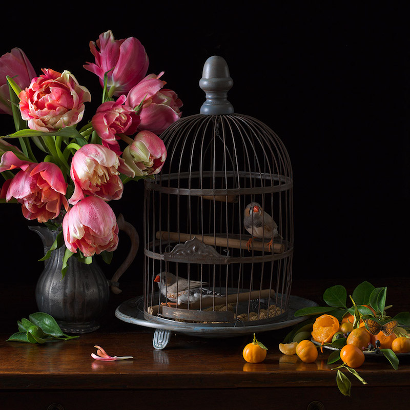 Paulette Tavormina   Zebra Finches and Tulips , 2017 Archival pigment print  16 x 16 inches, edition of 15 24 x 24 inches, edition of 7 36 x 36 inches, edition of 5