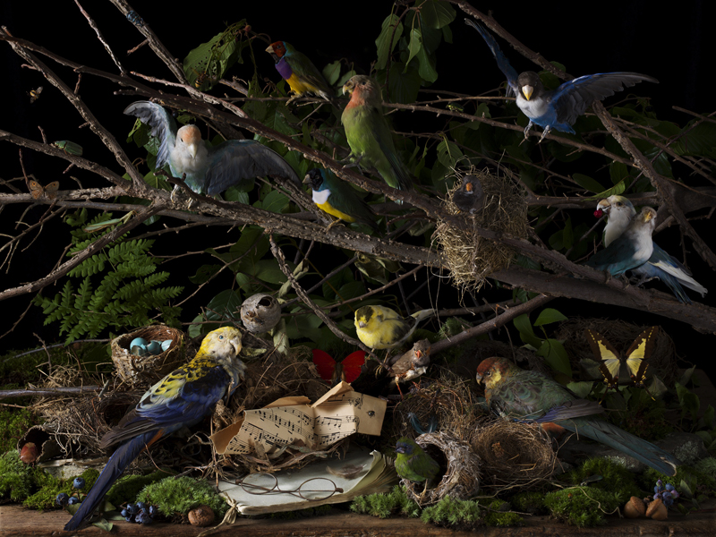 Concert of Birds, 2018  Archival pigment print  15 x 20 inches, edition of 15 22.5 x 30 inches, edition of 7 36 x 48 inches, edition of 5
